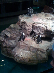I know these penguins are cool hangin' with members of the opposite sex...